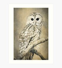 Owl in Sepia Art Print
