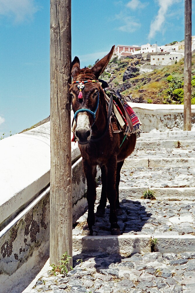 Just Resting, Santorini by Leigh Penfold
