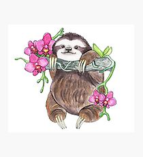 Happy Sloth with orchids Photographic Print
