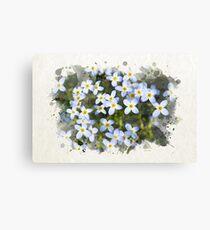 Bluet Flowers Watercolor Canvas Print