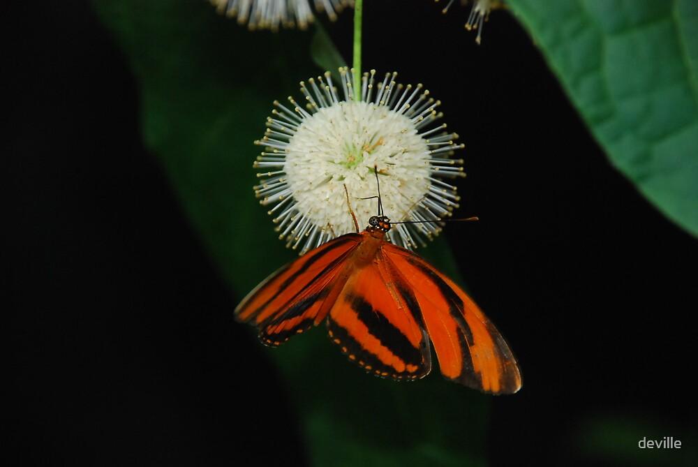 butterflies by deville