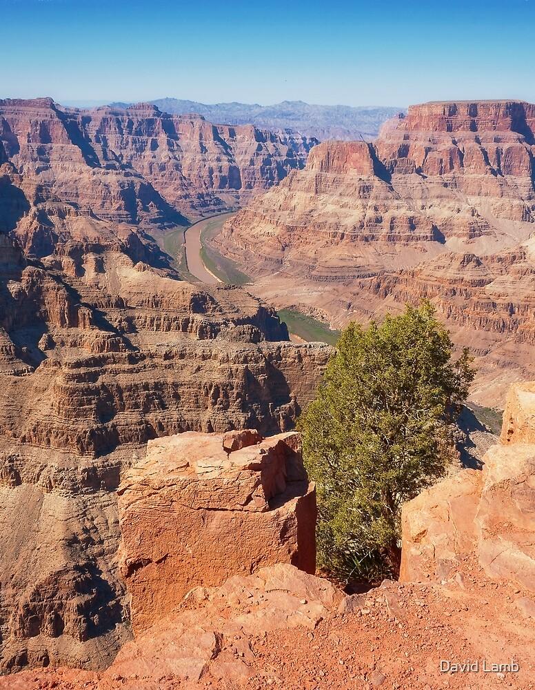Cliff Tree at Grand Canyon by David Lamb