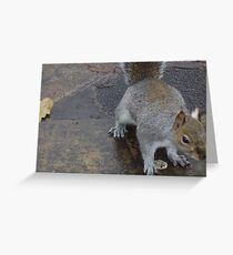 Ceril the squirrel Greeting Card