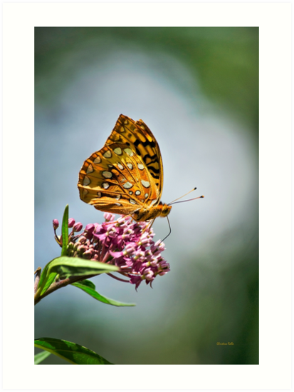 Garden Butterfly by Christina Rollo