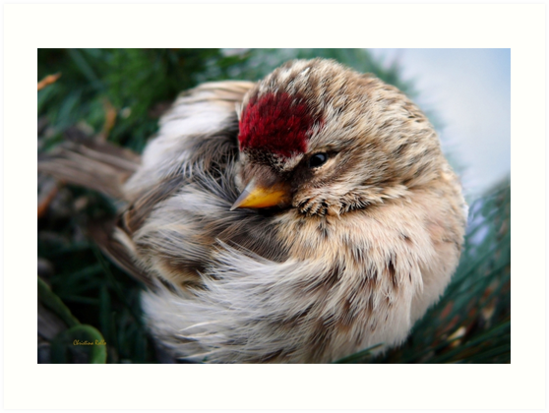 Ball of Feathers by Christina Rollo