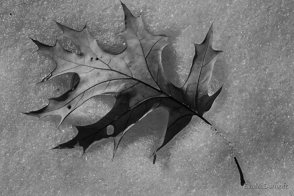 Leaf on Snow by EvaMcDermott
