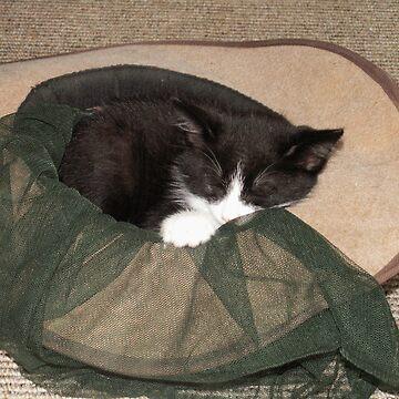 cat in the hat by bucko67