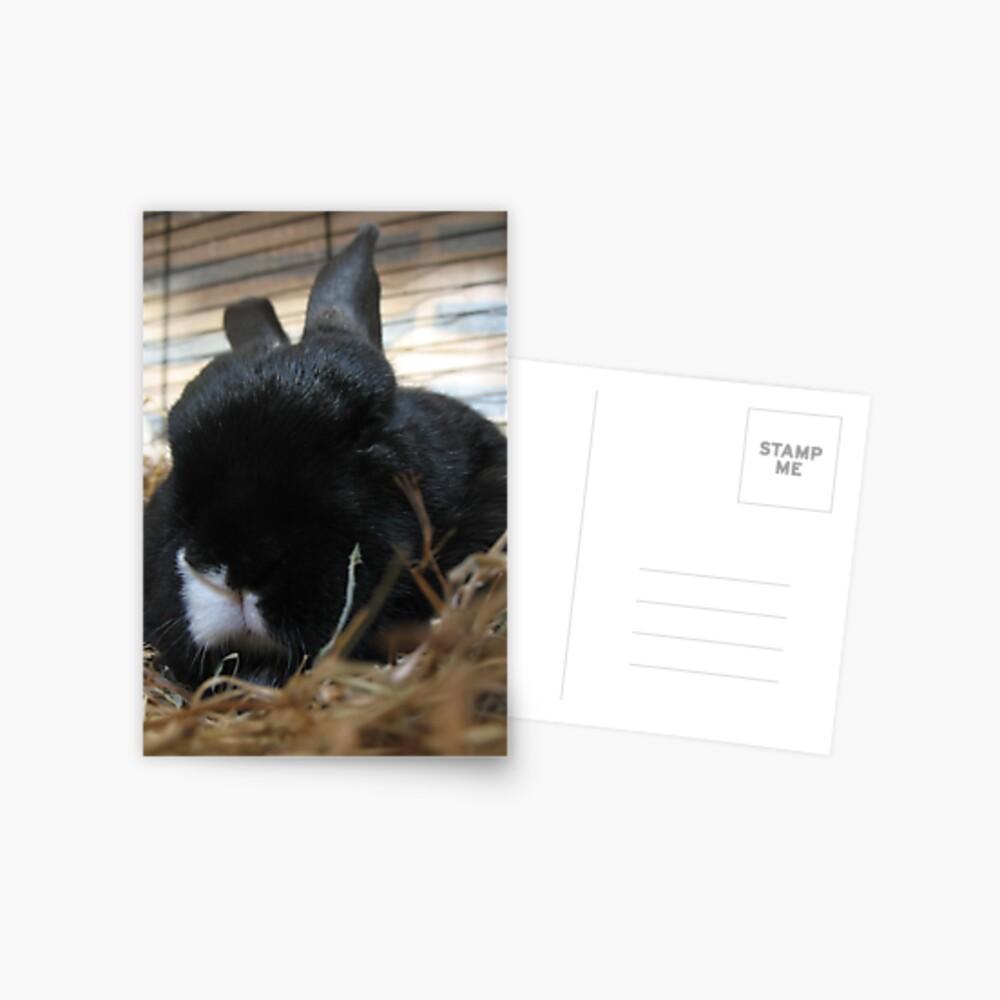 Smudge's snuggle Postcard