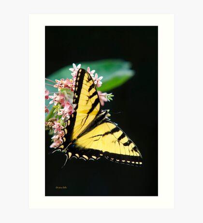 Swallowtail Butterfly on Flower Art Print