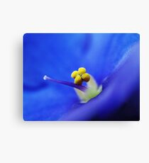 Violets are blue!! Canvas Print