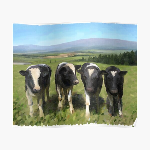 Curious cows Poster