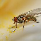 Fly on Flower Petal by relayer51