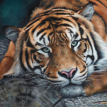 'Sumatran Tiger - Intensity' square by MCColyer