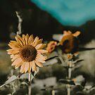 Sunflower Daze by Leah Flores