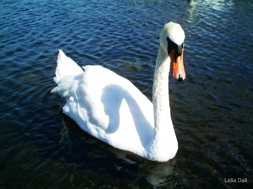 The Swan by Lidiya