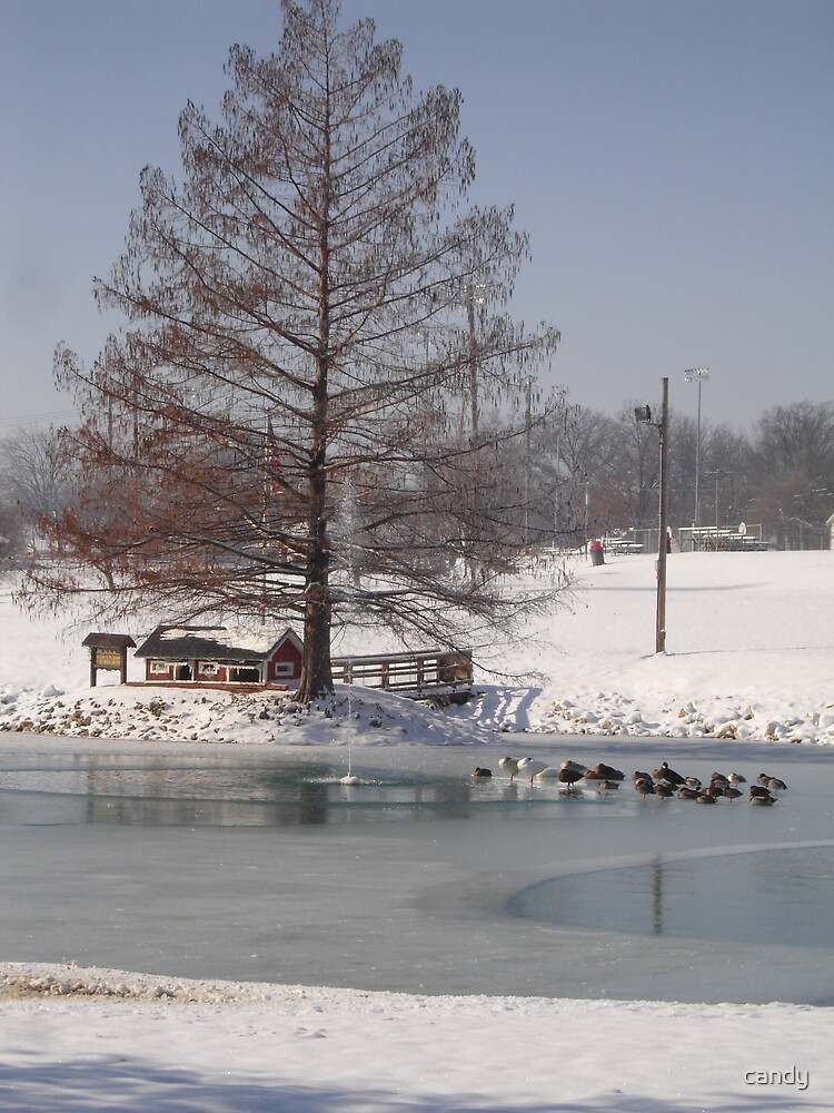 Ducks on the ice in the citypark by candy