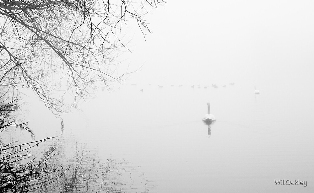 Buy image @ www.willoakley.com Swansong by WillOakley
