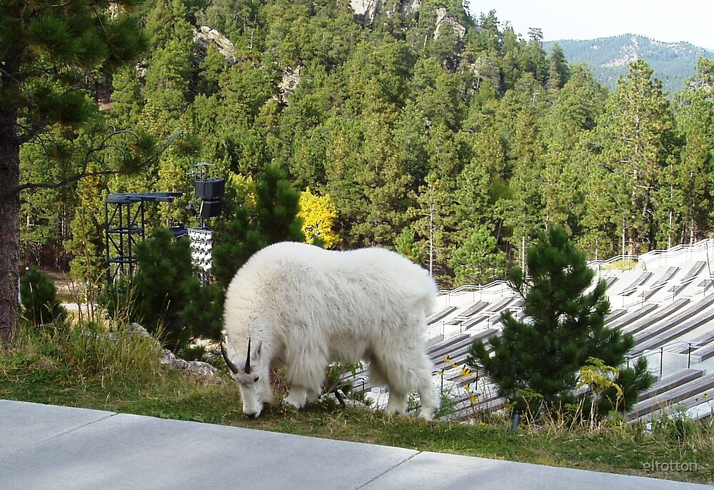 Mountain Goat at the Momument by eltotton