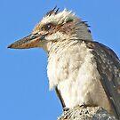 Kookaburra in Profile by Graeme  Hyde