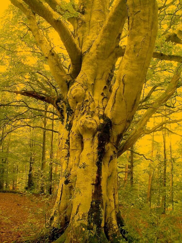 Imposing Tree by Hippyman