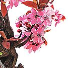 Almond Blossoms by TinaGraphics