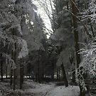 Ice Trees by GabbySunlight