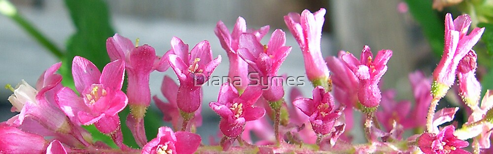 Pink Gems by Diana Symes