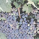 Grapes on The Vine by Sherry Hallemeier