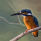 Kingfisher by Jeff Powers Illustration