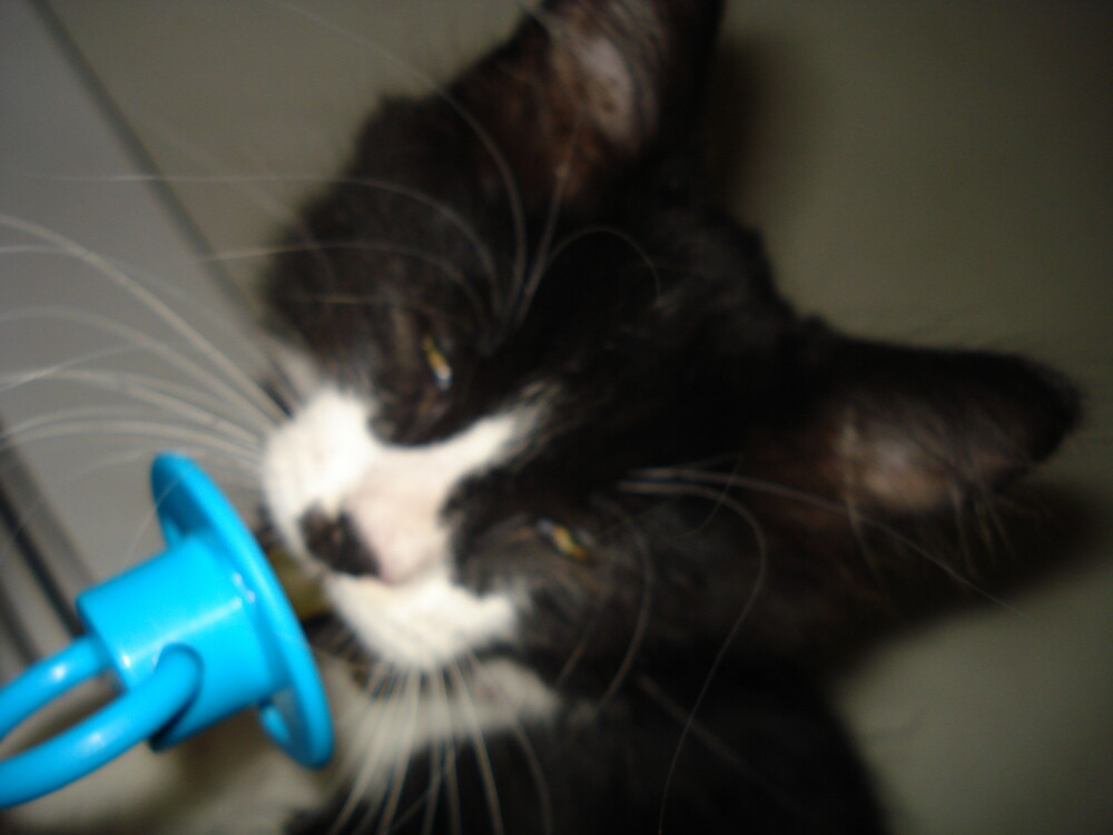 cat with dummy by louisew30