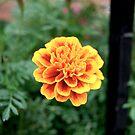 New York - Flower by jookboy