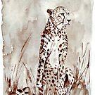 The Cheetah (Acinonyx jubatus)  by Maree Clarkson
