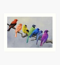 Birds of all Colors Art Print