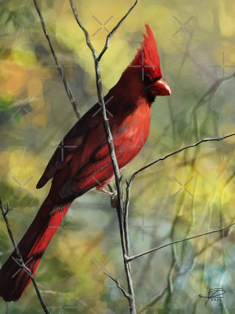 Cardinal by Jeff Powers Illustration