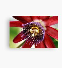 Red and Purple Passion Canvas Print
