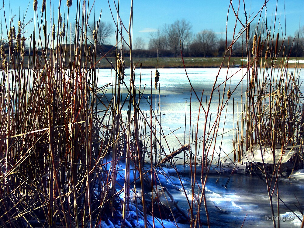 Looking throught the Cattails by hammye01