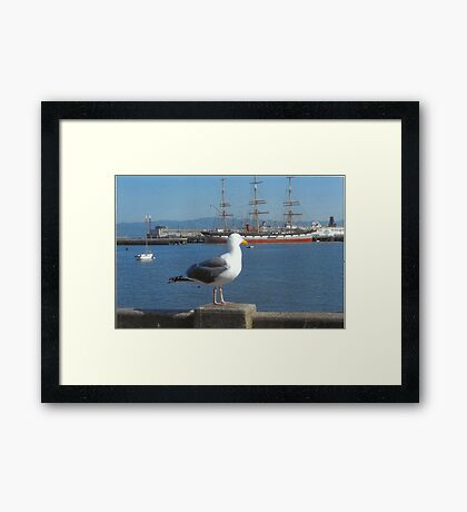 The Seagull Looks Out To The Sea Framed Print
