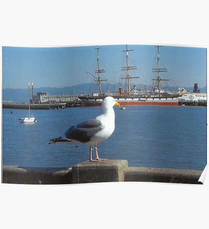 The Seagull Looks Out To The Sea Poster