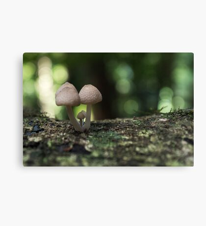 Fungi 3.5 Canvas Print