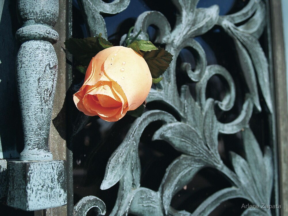 Swirled Flower 2 by Arlene Zapata