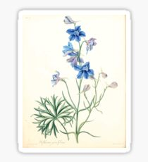 Floral illustrations of the seasons Margarate Lace Roscoe 1829 0266 Delphinium Grandiflorum Sticker