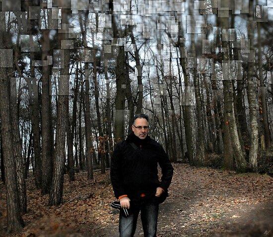 Belgium Forest by Paul Vanzella