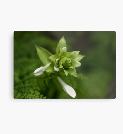 A Little Green and White Metal Print