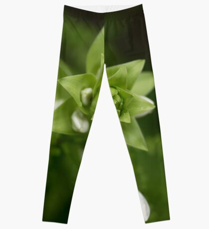 A Little Green and White Leggings