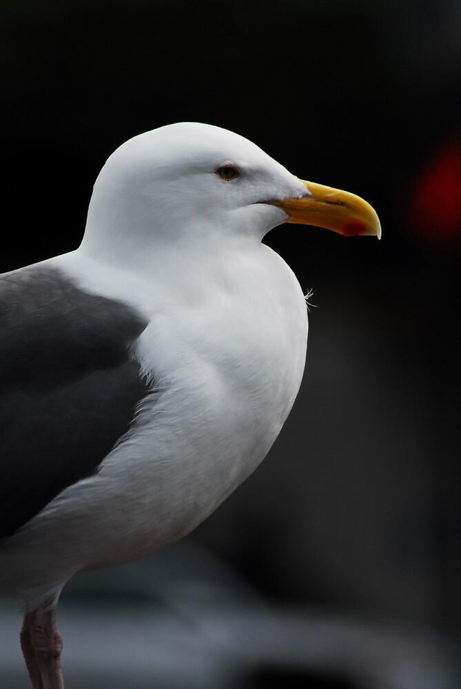 Seagull  by CarloDC