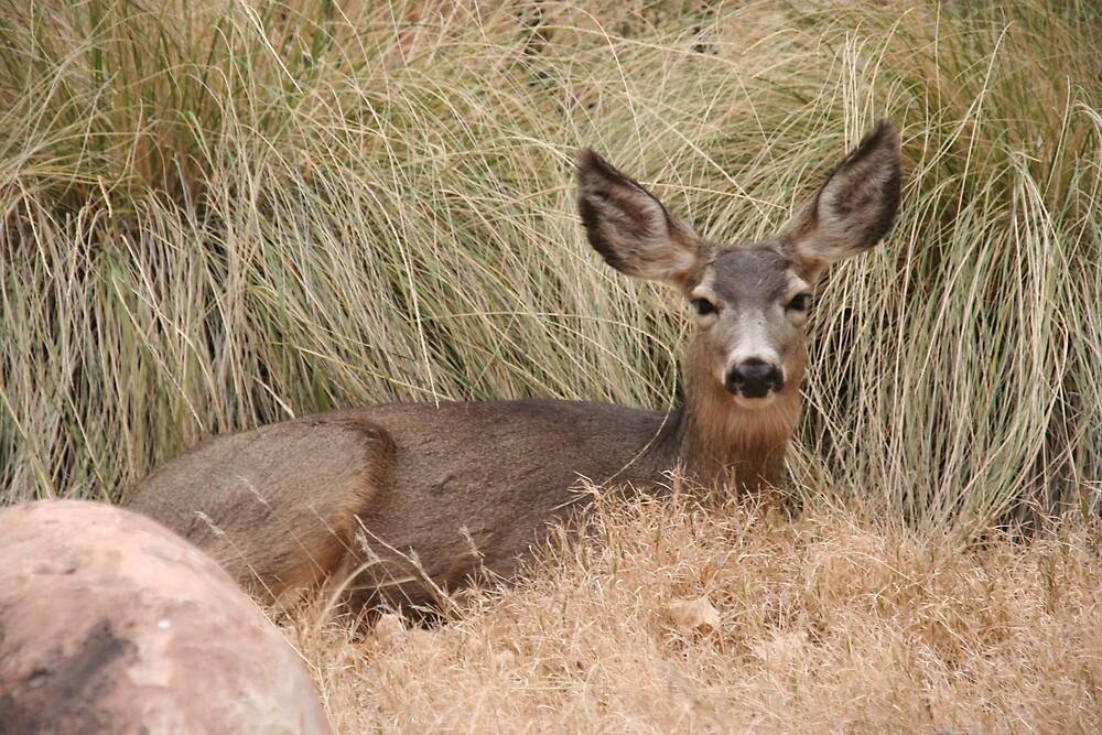 The resting doe by DeborahTa