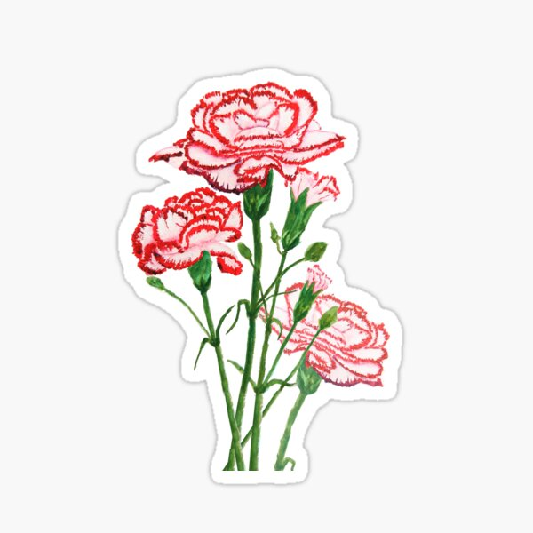 red and pink carnation watercolor painting  Sticker
