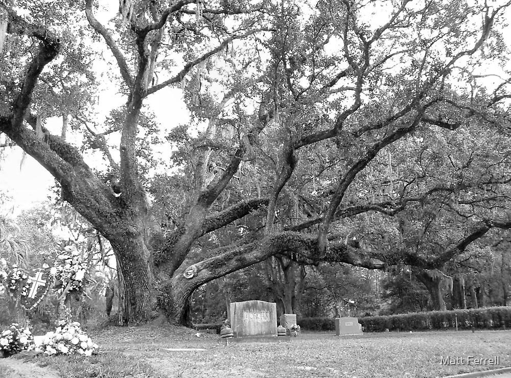 Looming tree in cemetery by Matt Ferrell