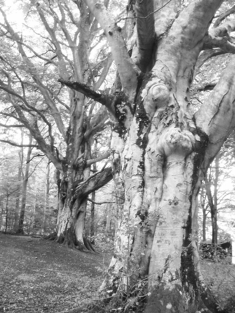 Creepy Couple of Trees by Hippyman