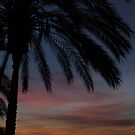 Dawn Under The Palm Tree  by wiggyofipswich